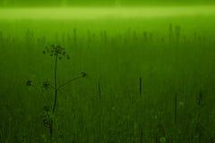 Pré vert Photographie stock