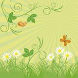 Pré vert Photos libres de droits