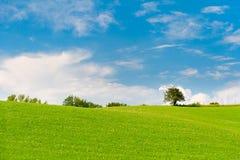 Pré vert avec des arbres à l'horizon photographie stock libre de droits