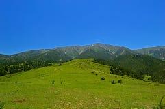 Pré vert avec des montagnes à l'arrière-plan Photos libres de droits