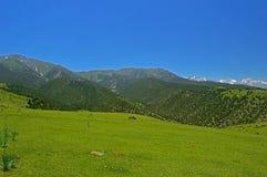 Pré vert avec des montagnes à l'arrière-plan Photographie stock libre de droits