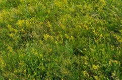 Pré vert d'été. milieux ruraux de nature Images libres de droits