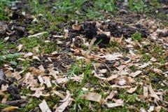 Pré vert dans le sol moite avec du bois photo libre de droits