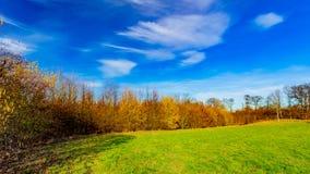 Pré vert entouré par des arbres un beau jour ensoleillé d'hiver images stock