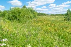 Pré vert russe avec des fleurs images libres de droits