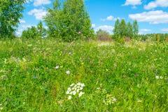 Pré vert russe avec des fleurs photo libre de droits