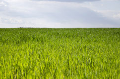 Pré vert sous le ciel bleu avec des nuages Photographie stock