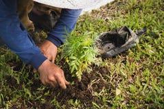 Précipitation de travailleurs pour planter l'arbre photos stock