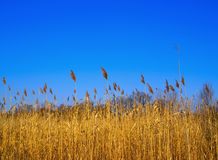 Précipitation et ciel Photographie stock libre de droits