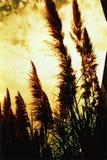 Précipitations dans le vent Image libre de droits