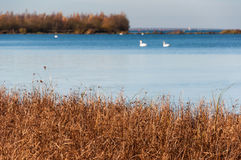 Précipitations devant un étang naturel Photographie stock