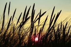 Précipitations silhouettées au coucher du soleil photo libre de droits