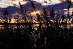 Précipitations silhouettées dans le coucher du soleil. Le Camargue photo libre de droits