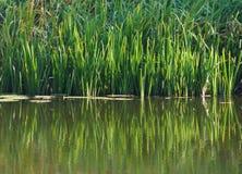 Précipitations sur le lac photographie stock