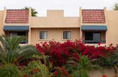 Prédio de apartamentos atrás de uma parede com buganvílias de florescência fotografia de stock royalty free