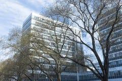 Prédio de escritórios e árvores Fotografia de Stock Royalty Free