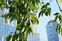 Prédio de escritórios moderno com folhas verdes Fotografia de Stock Royalty Free