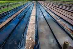 Préparation agricole hydroponique photos libres de droits