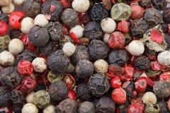 Préparation colorée de poivrons Poivre rouge, noir, vert et blanc épice photos libres de droits