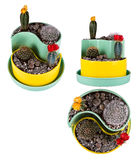 Préparation de cactus Photos stock