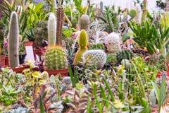 Préparation 1 de cactus Image libre de droits
