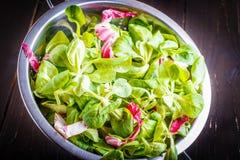 Préparation de salade Images stock