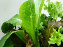 Préparation de salade photo stock
