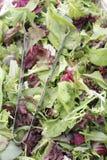 Préparation de salade de Mesclun avec des pinces Image stock