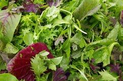 Préparation de salade de verts de champ photo libre de droits