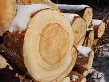 Préparation du bois Photo libre de droits