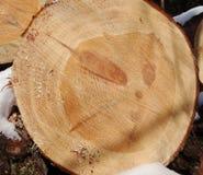 Préparation du bois Photo stock