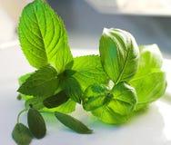 Préparation fraîche d'herbes Photo stock