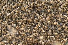 Préparation pour le travail et la saison pour des abeilles photo libre de droits