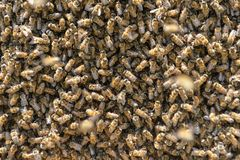 Préparations de miel pour la nouvelle saison des abeilles photo stock