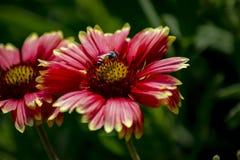 Préparations de nectar photos libres de droits