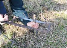 Préparer la branche de pommier pour greffer avec le couteau Greffant les arbres fruitiers point par point photo stock