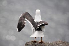 Préparez au vol photo libre de droits