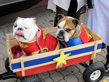 Préparez pour Halloween a habillé des bouledogues dans le chariot Photo stock