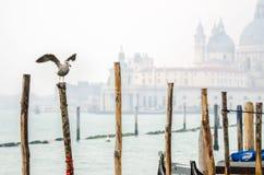 Préparez pour voler à Venise Photo libre de droits