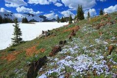 Prés alpestres au Wyoming Image libre de droits