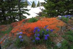 Prés alpestres au Wyoming Photographie stock libre de droits