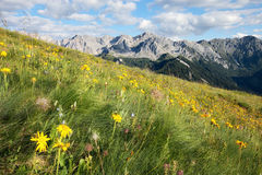 Prés alpins Images libres de droits
