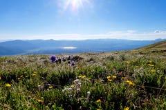 Prés alpins allumés par dos avec des rayons de soleil image libre de droits