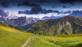 Prés alpins dans les montagnes de Caucase. Image libre de droits