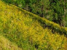 Prés alpins remplis Images libres de droits