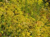 Prés alpins remplis Photographie stock libre de droits