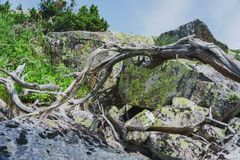Prés alpins Taganay Photo stock