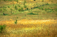 Prés d'or, Australie du sud Images stock