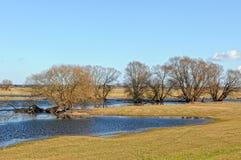 Prés de l'Elbe dans le printemps Willow Trees Photo stock