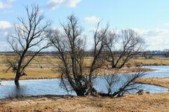 Prés de l'Elbe dans le printemps Willow Trees Images libres de droits